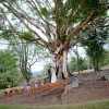 wedding planner sunshine coast maleny montville and